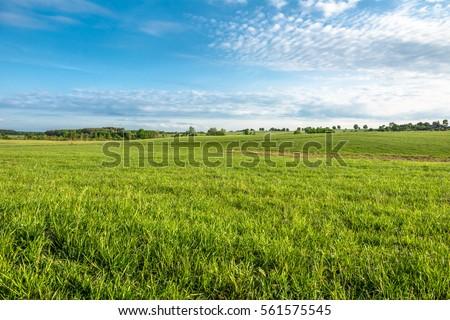Grass field, green spring landscape #561575545