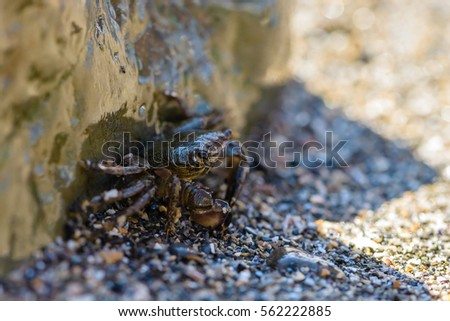 Little crab hiding behind a big stone on the sea beach #562222885