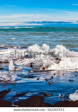Beach with brown - black sand covered with ice shards. The concept of extreme northern tourism. Atlantic coast, Iceland. Ice Lagoon Jokulsarlon #562265911