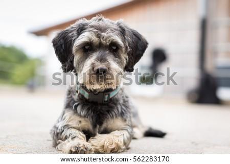 Dog #562283170