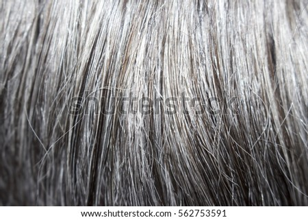 Gray beard and hair men #562753591