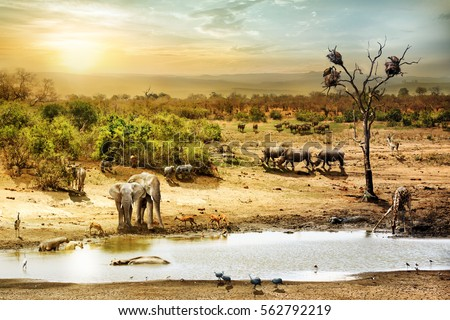 Dreamy scene of common South African safari wildlife animals together at sunset  Royalty-Free Stock Photo #562792219