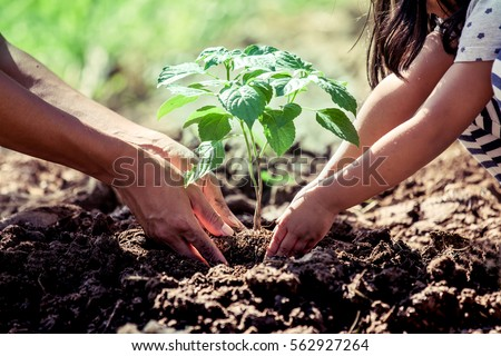 Asian little child girl helping her father to plant the young tree in the garden as save world concept #562927264