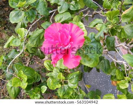 flower #563104942