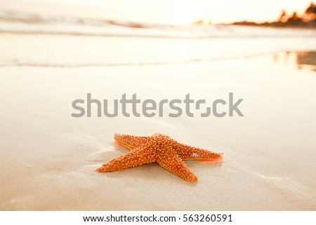 starfish shell on beach in sunrise light, seascape, live action Royalty-Free Stock Photo #563260591