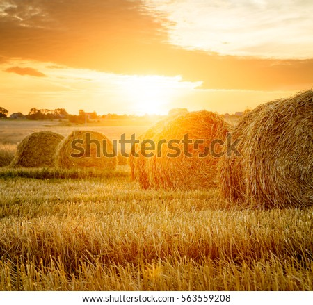 Summer Farm Field with Hay Bales on the Background of Beautiful Sunset. Agriculture Concept. Haystack Scenery. Toned and Filtered Photo with Copy Space. #563559208