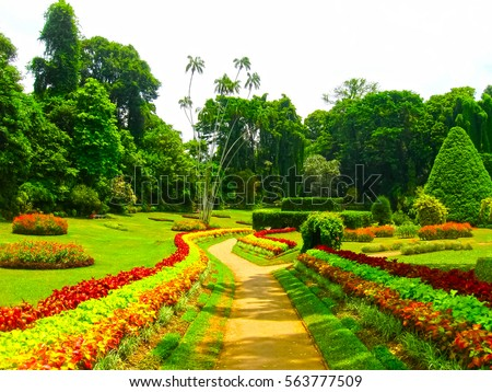 Royal Botanical garden Peradeniya. Sri Lanka Royalty-Free Stock Photo #563777509