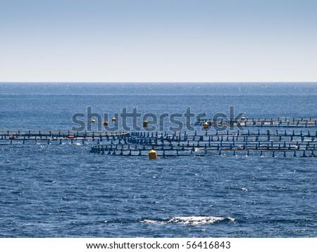 Detail of an offshore fish farm pen #56416843