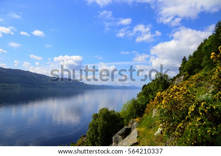 Yellow Gorse blooming on the shores of Loch Ness in Scotland. #564210337