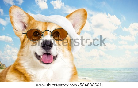 dog resting on the sea in summer #564886561