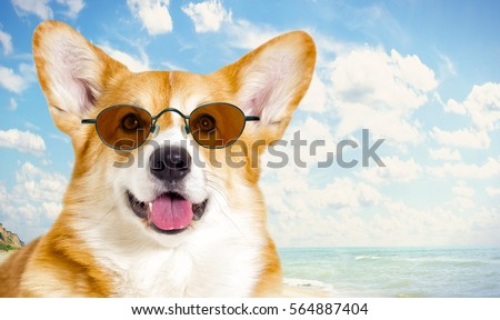 dog looking, seascape #564887404