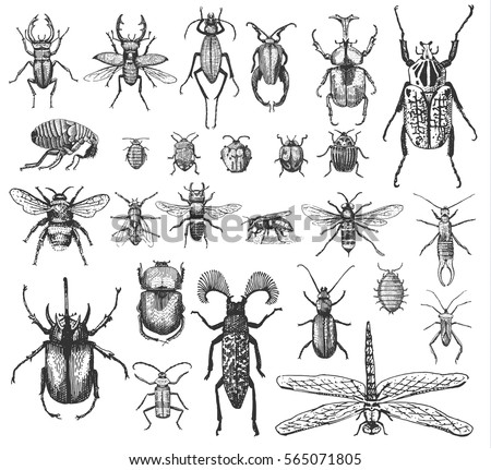 big set of insects bugs beetles and bees, fleas many species in vintage old hand drawn style engraved illustration woodcut animals.