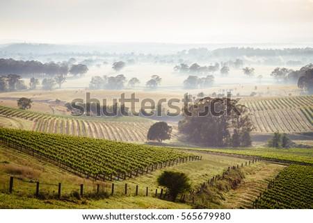 Sunrise over Hunter Valley vineyards Royalty-Free Stock Photo #565679980