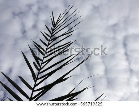 branch of coconut tree with cloudy sky as background #565719325