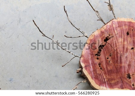Section of wood log with twigs viewed on a grey concrete background #566280925