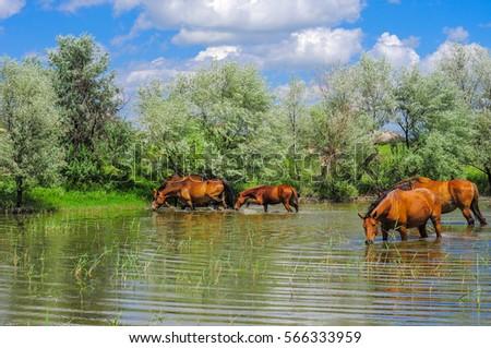 horses #566333959