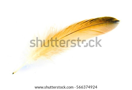 bird feather on white background #566374924
