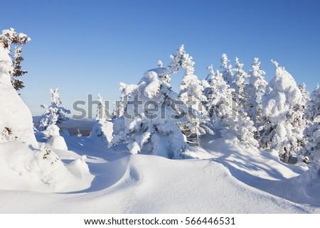 Snow covered forest. Winter landscape. Mountain range Zuratkul #566446531
