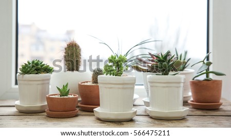 Pots with succulents on windowsill #566475211