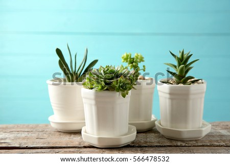 Pots with succulents on blue background #566478532