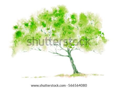 Green tree. Watercolor hand drawn illustration.
