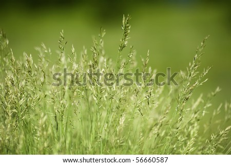 Background of green grass, shallow depth of field #56660587