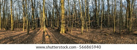 scenic forest landscape in winter in morning light #566865940