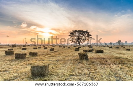 hay bales on foggy morning on meadow. sunrise landscape photo with