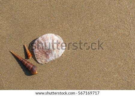 Shells on the sand beach. #567169717
