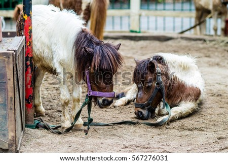 The Safari World, Zoo Little horse #567276031