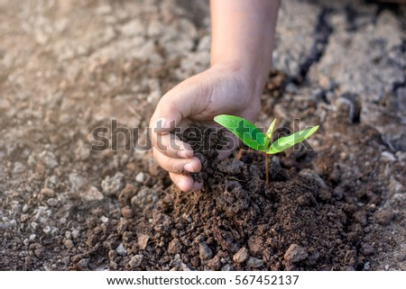 The right hand of the children are planting the seedlings into the soil. #567452137