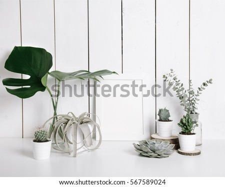 Stylish feminine space with monstera leaves in vase, cactus, eucalyptus, succulent and tillandsia at home or studio with white wooden background on shelf. Isolated mockup frame. Styled still life