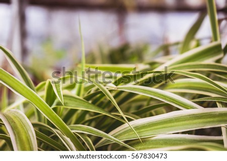 Green plants in pots #567830473