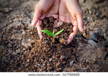 Men hands are planting the sedling into the soil,ecology concept. #567988888