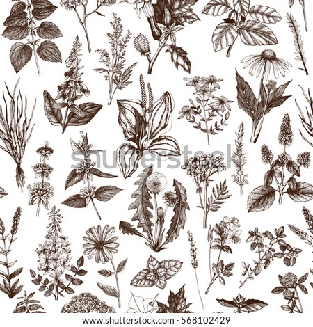 Seamless pattern with hand drawn herbs and weeds collection. Vintage background with Botanical sketch. Medicinal and Poisonous Plants illustration.