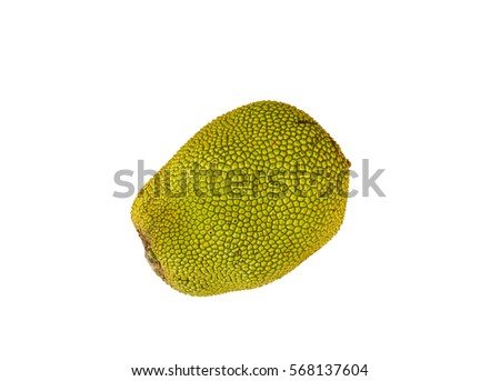 Isolated green jackfruit on white #568137604