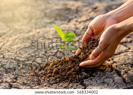 Two hands of the men  were planting the seedlings into the ground to dry. #568334002