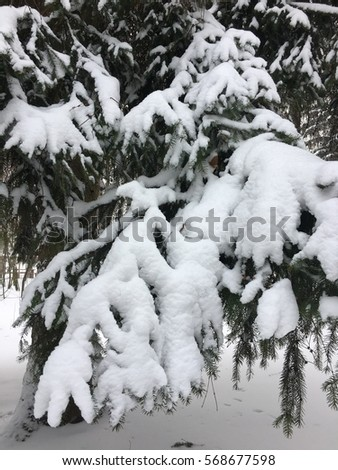 tree branch in the snow #568677598
