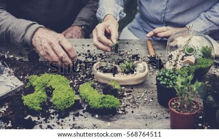 Botanical Environment Greenery Pottery Nature #568764511