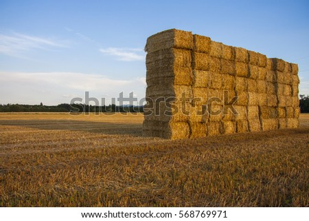 Agriculture #568769971