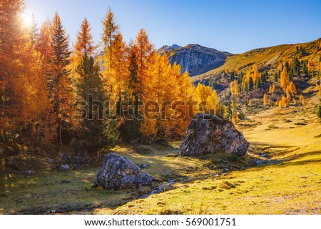 Magical yellow larches glowing in the sunshine. Unusual and gorgeous scene. Tourist attraction. Location place Dolomiti Alps, Cortina d'Ampezzo, Passo di Giau, Veneto, Italy, Europe. Beauty world.