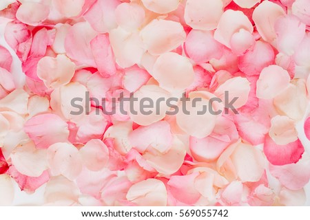 Pink rose petals. Valentine's day background. Flat lay, top view Royalty-Free Stock Photo #569055742