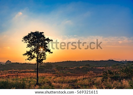 morning sunrise at field with tree back ground #569321611