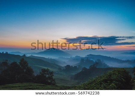 Cameron Highlands Sunrise at green tea farm mountain. Dramatic moving cloud in nature landscape on sunshine morning. #569742238
