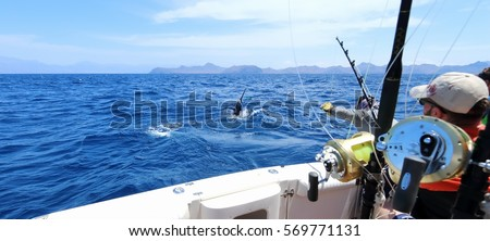 Big game fishing. Caught a marlin jumping near the boat. Royalty-Free Stock Photo #569771131