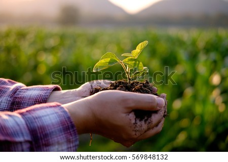 Agriculture. Farmer and nature baby plant in hands. #569848132