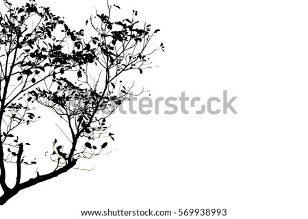 Tree silhouette isolated on white background, Copy space