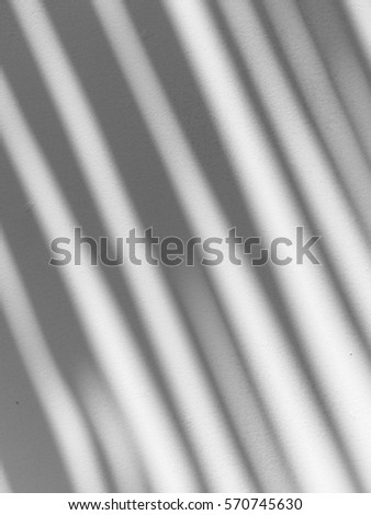 shadow of the leaves on a white wall #570745630