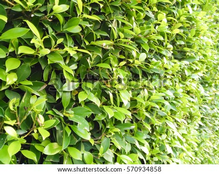 Small green leaves wallpapers #570934858