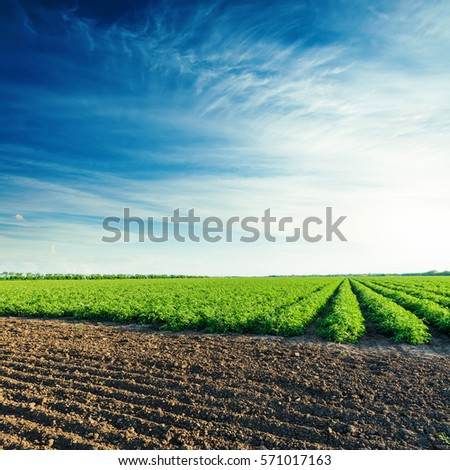 deep blue sky in sunset over agriculture fields #571017163